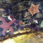 Foto de Cabrillo Marine Aquarium