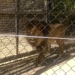 Photo of Adelaide Zoo