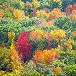 Fall at Devils Lake