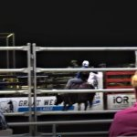 Bull Riding a the Great Western