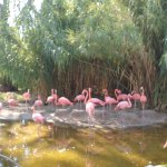 flamingos exibit