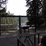 Caribou at tram gate