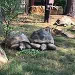 Feeding time for tortoises