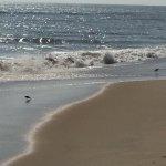 Photo de Sandbridge Beach