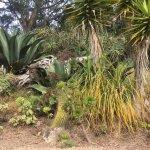 Foto de San Francisco Botanical Garden