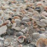 Seashells on the beach.