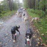going for a ride with the dogs