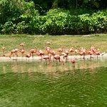 Foto di Jungle Island