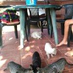 desayuno con gatos