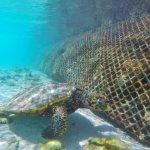 Super Unterwasserwelt