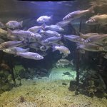 The big fish tank