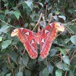 Photo of L'Ile aux Papillons