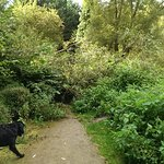 My dog baffled by the Holy Well walk !