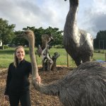 Big Birds at the Big Bird - Giant Moa and Ostrich