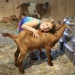 Cuddling with the goats is a favorite activity for children and adults!