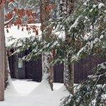 Douglas Fir Cabin in the Snow