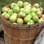 Log Cabin Orchard