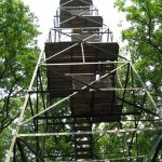 Fire Tower in Cook Forest