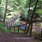 Bridge across Tom's Run, Cook Forest