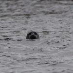 A curious seal