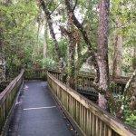 Blue Spring State Park Foto