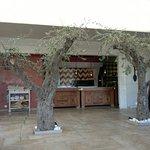 Dans la salle la vue sur les cuisines, les oliviers ont souffert du soleil de feu.
