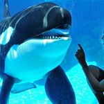 Spend the day at SeaWorld, located just 20 minutes south of the hotel