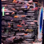 Photo de Interactive Aquarium
