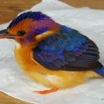 Birding at Spion Kop Lodge.