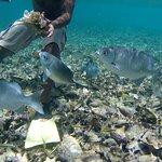 Caveman Snorkeling Tours Foto