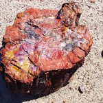 Just one of the beautiful pieces of petrified wood.