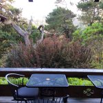 Enjoy looking into the wild Bishop pine forest from the main deck