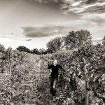 A partnering vineyard
