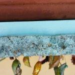 Assorted chrysalis at Butterfly Farm, Aruba