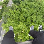 our feet dangles on top of the trees
