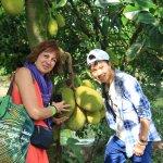 jacke fruit