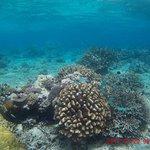 Paradise Taveuni Foto