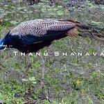 Фотография Wayanad Wildlife Sanctuary