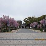 徳川園の入口前の広場です。この時期の桜がきれいです。