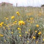 Iramoo Wildflower Grassland Reserve