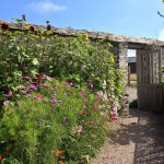 Inside the walled garden at Sandleigh