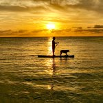 Stand up Paddle board witj our Golden Retriever
