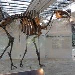 Mammal exhibit