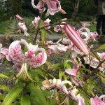 Foto de Botanical Gardens (Botanisk Hage og Museum)
