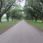 The unbelievable Avenue of Oaks.