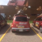 delivery vehicle... moose butt!