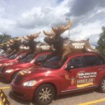That's alot of moose!