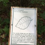 Example of tree identification signage.