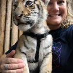 Sarabi the Bengal tiger cub