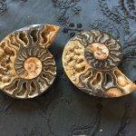 Black Ammonite Fossil Pair